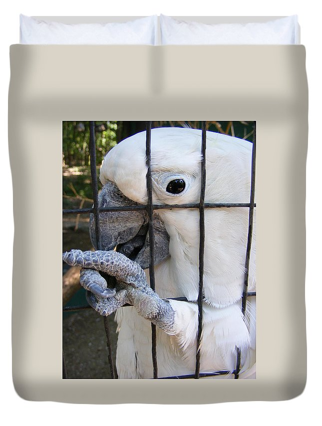 Bird Duvet Cover featuring the photograph Hand Me The Key Please by Ed Smith