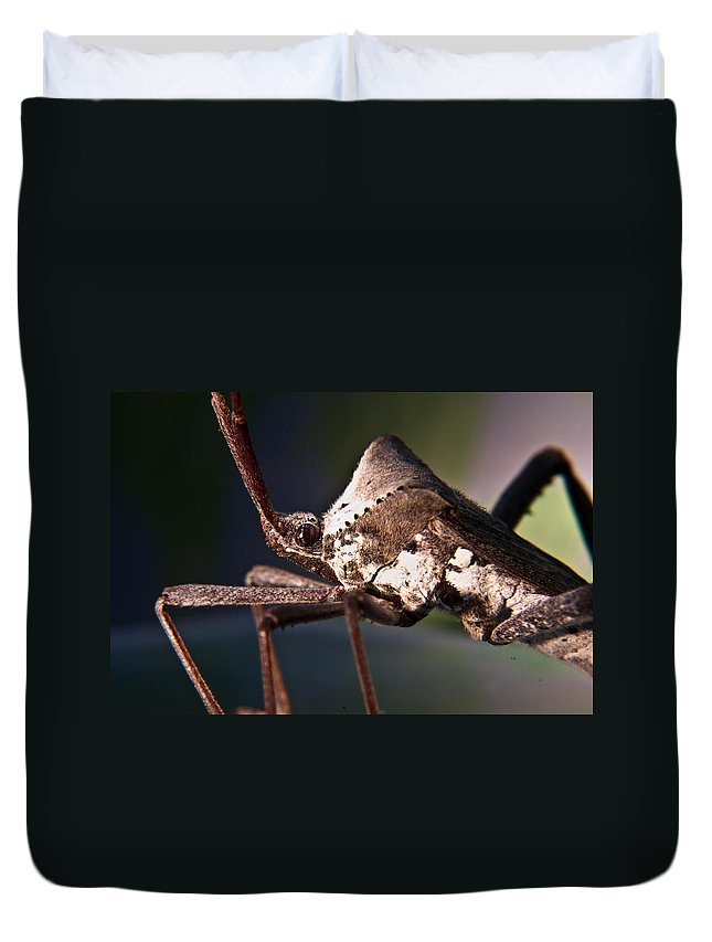 Hemiptera Duvet Cover featuring the photograph Handsome Bug by Douglas Barnett