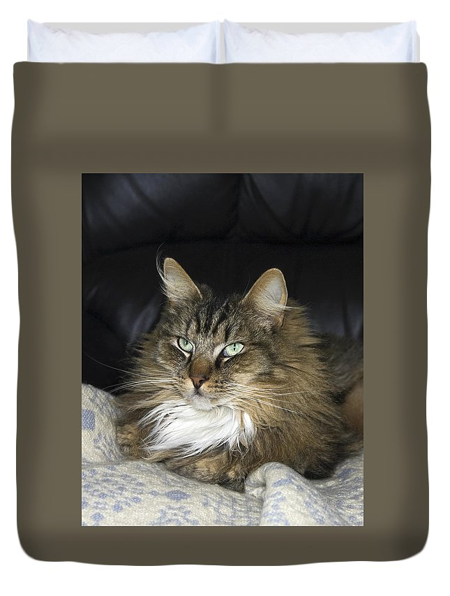 Fluffy Cat Duvet Cover featuring the photograph Handsome Cat by Sally Weigand
