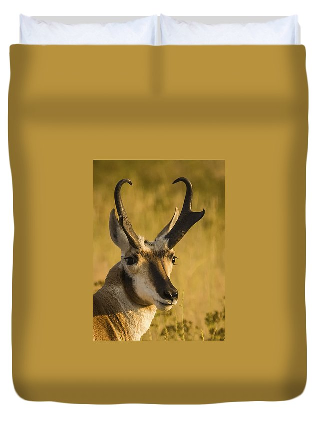 Antelope Duvet Cover featuring the photograph Handsome Is by Albert Seger