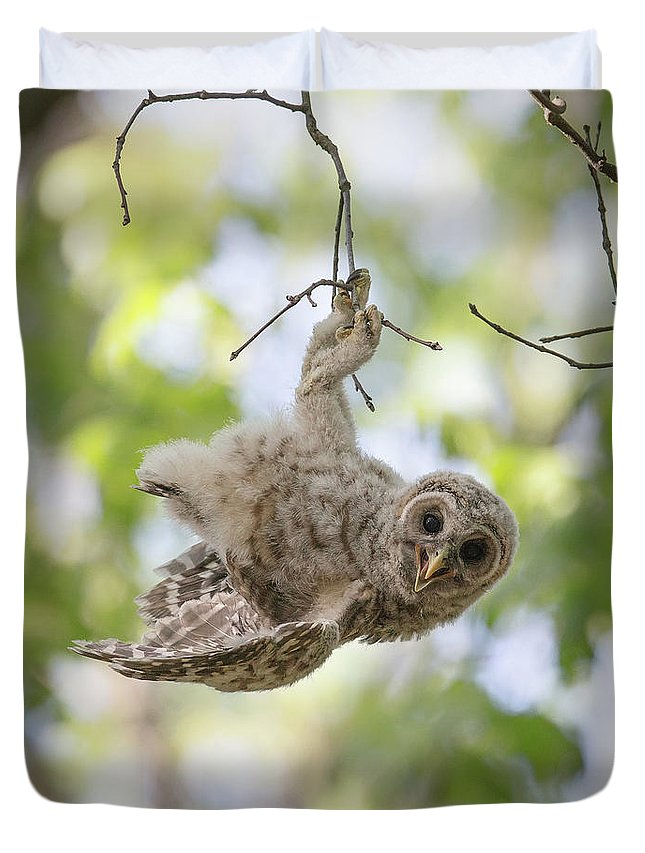 Owl Duvet Cover featuring the photograph Hang In There by Christopher Ciccone