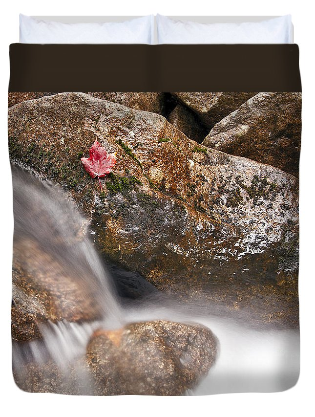 Acadia National Park Duvet Cover featuring the photograph Hanging On by Glenn Gordon