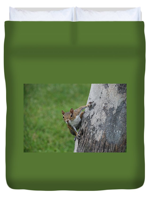 Squirrel Duvet Cover featuring the photograph Hanging On by Rob Hans