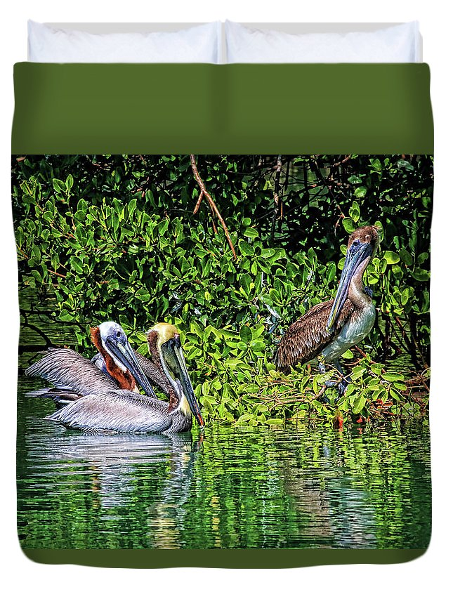 Brown Pelican Duvet Cover featuring the photograph Hanging Out by HH Photography of Florida