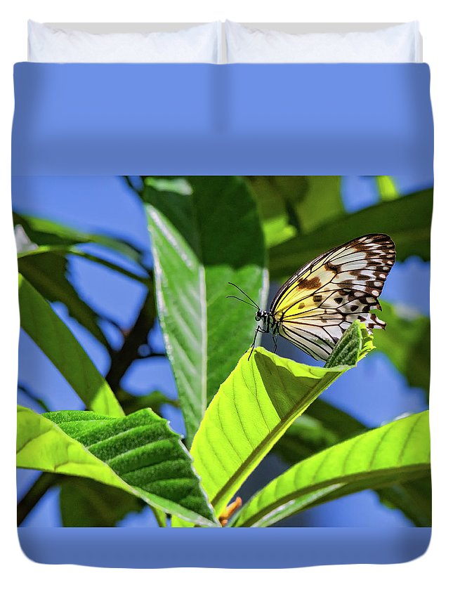 Butterfly Duvet Cover featuring the photograph Hanging Out by Joseph Caban