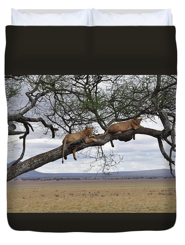 Lion Duvet Cover featuring the photograph Hanging Out by Rachel Young