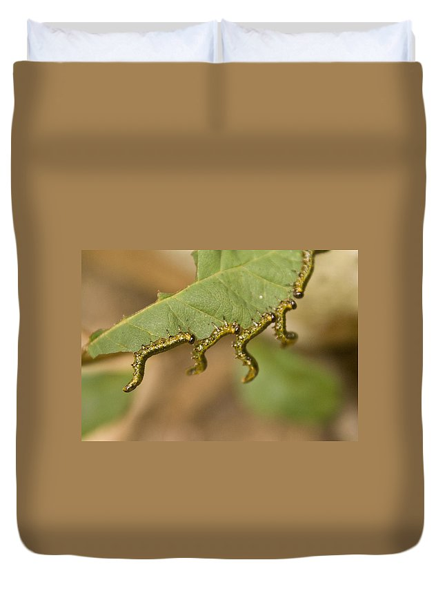 Larvae Duvet Cover featuring the photograph Hanging There by Douglas Barnett