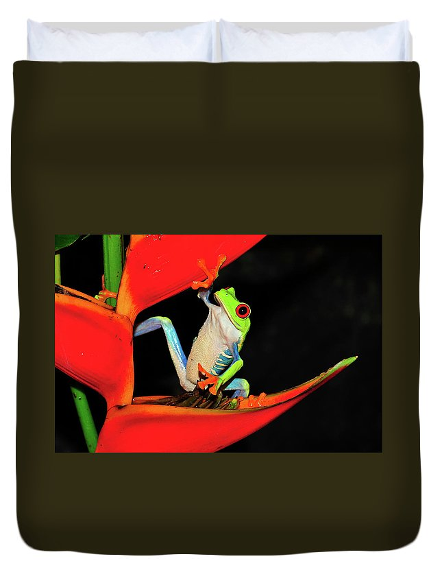 Frog Framed Prints Duvet Cover featuring the photograph Happy Frog by Harry Spitz
