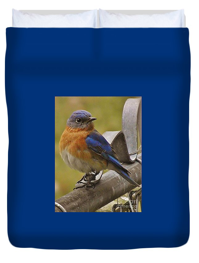 Happy New Year Male Bluebird Duvet Cover featuring the photograph Happy New Year Male Bluebird by Earl Williams Jr