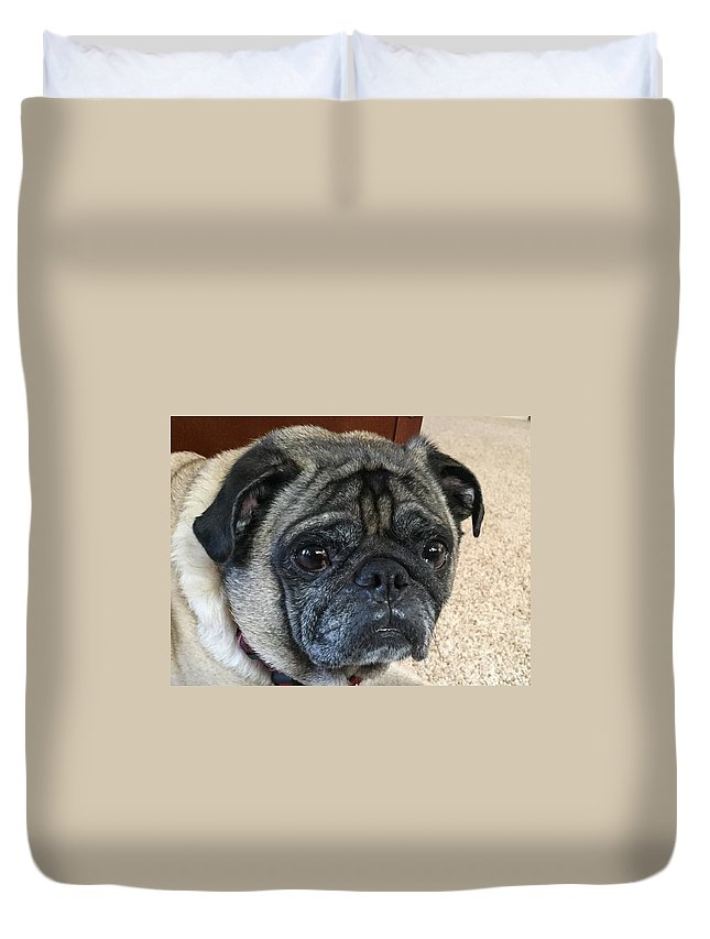 Happy Pug Wrinkles Dog Closeup Duvet Cover featuring the photograph Happy Pug by Russell Keating
