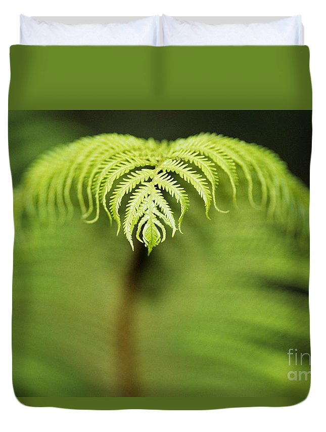 Abstract Duvet Cover featuring the photograph Hapuu Fern by William Waterfall - Printscapes