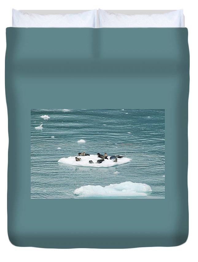 Seal Duvet Cover featuring the photograph Harbor Seals by Michael Peychich