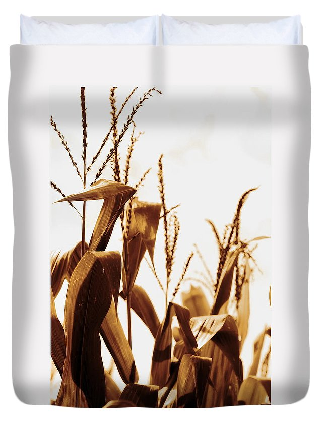 Farm Duvet Cover featuring the photograph Harvest Corn Stalks - Gold by Angela Rath