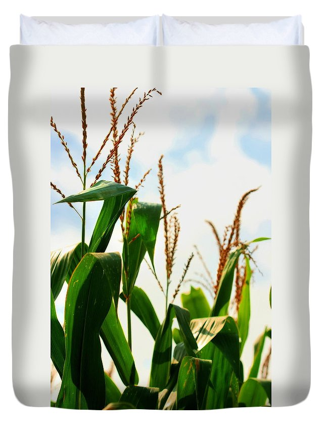 Farm Duvet Cover featuring the photograph Harvest Corn Stalks by Angela Rath