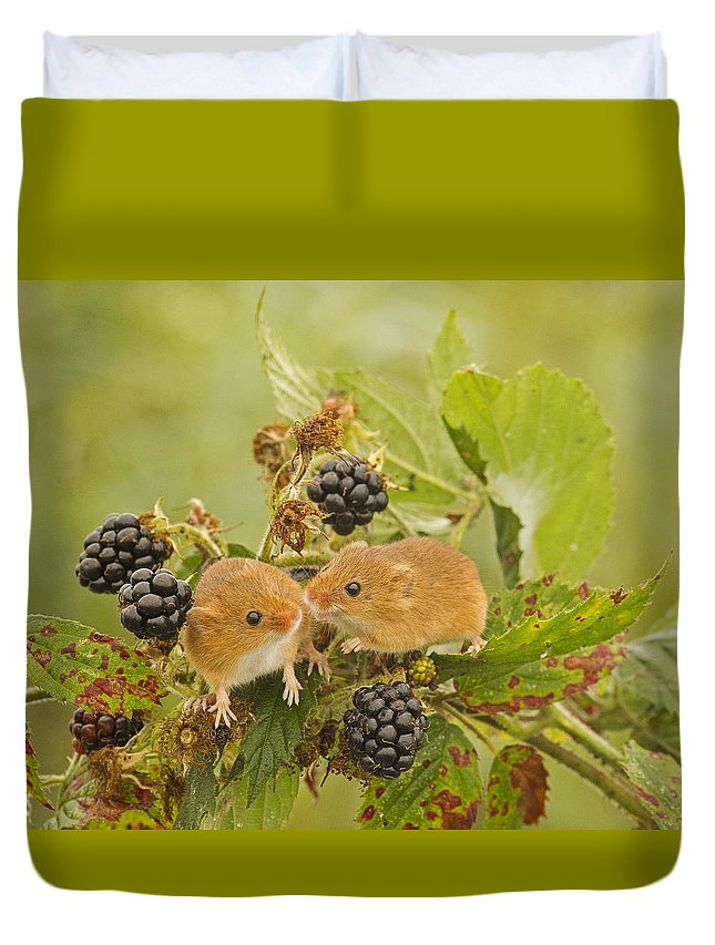 Harvest Mice Duvet Cover featuring the photograph Harvest Mice On Blackberry by Jenny Hibbert