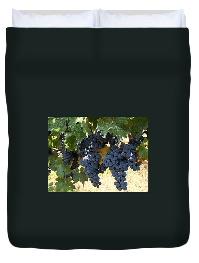 Grapes Duvet Cover featuring the photograph Harvest Time by Gale Cochran-Smith