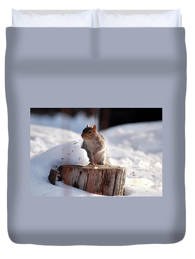 Squirrel Duvet Cover featuring the photograph Has Anyone Seen My Nuts by Lori Tambakis