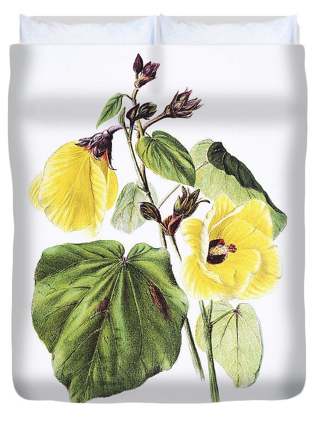 1885 Duvet Cover featuring the painting Hau Flower Art by Hawaiian Legacy Archive - Printscapes