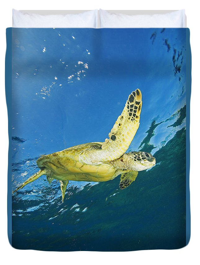Animal Art Duvet Cover featuring the photograph Hawaii, Green Sea Turtle by Ron Dahlquist - Printscapes