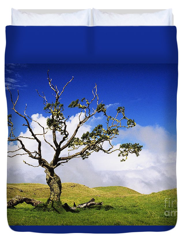 Ali O Neal Duvet Cover featuring the photograph Hawaii Koa Tree by Ali ONeal - Printscapes