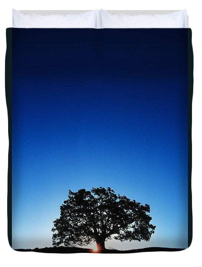 Alone Duvet Cover featuring the photograph Hawaii Koa Tree by Carl Shaneff - Printscapes