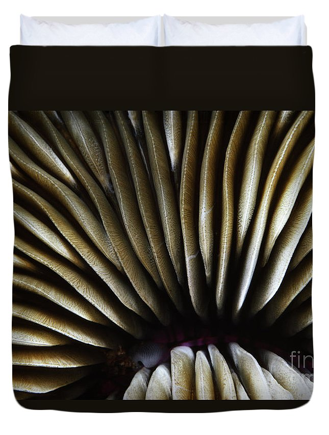 Above Duvet Cover featuring the photograph Hawaii Mushroom Coral by Ed Robinson - Printscapes