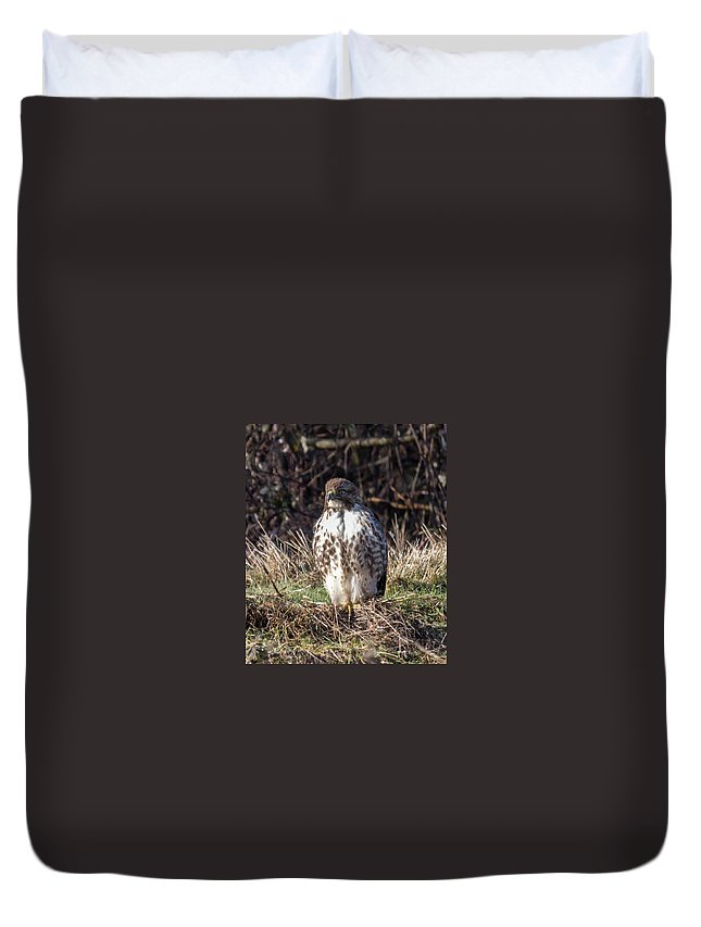 Hawk Duvet Cover featuring the photograph Hawk by Laura Lien