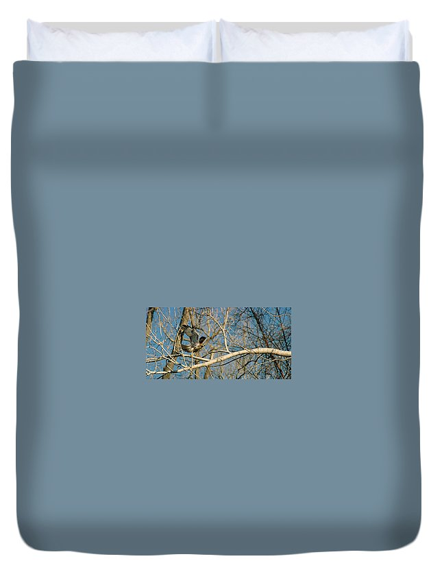 Hawk Duvet Cover featuring the photograph Hawk by Steve Karol