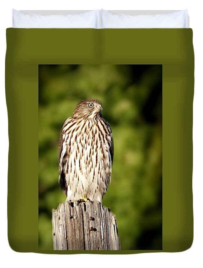 Hawk Duvet Cover featuring the photograph Hawk Waiting For Prey by Christine Till
