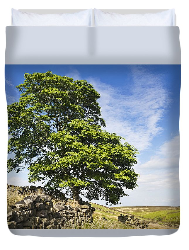 Afternoon Duvet Cover featuring the photograph Haworth Moor Sycamore by David Taylor
