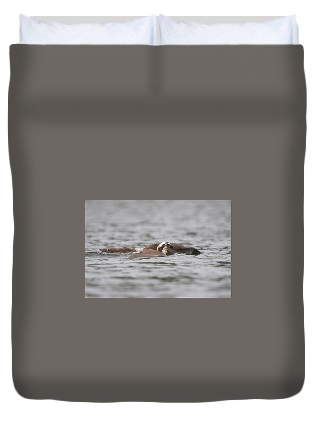 Osprey With Fish Duvet Cover featuring the photograph Head Above Water by Heather Quinn