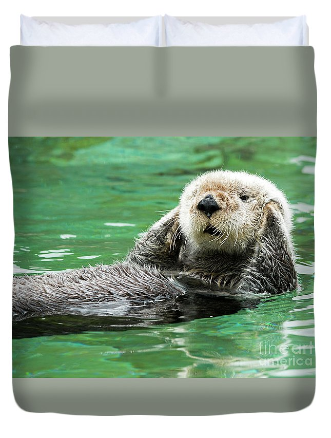 Sea Otter Duvet Cover featuring the photograph Hear No Evil by Mike Dawson