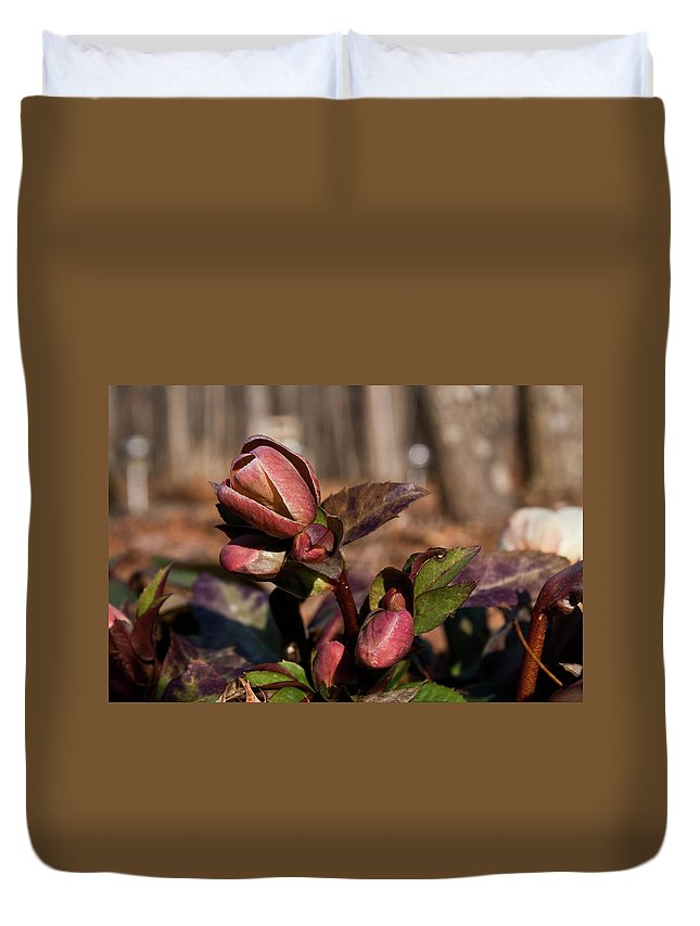Heliborus Duvet Cover featuring the photograph Heliborus Early Flower Buds 2 by Douglas Barnett