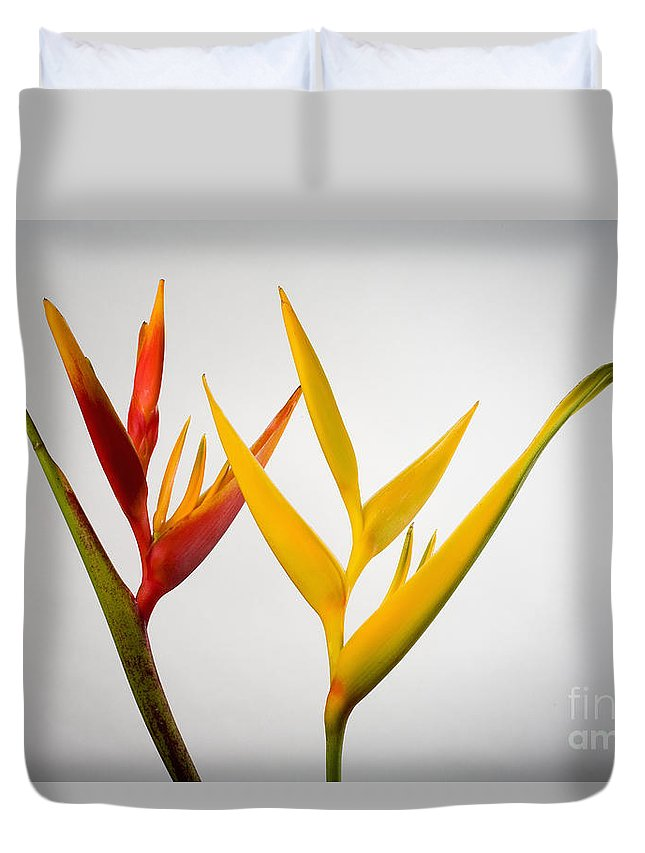 Botanical Duvet Cover featuring the photograph Heliconia by Tomas del Amo - Printscapes