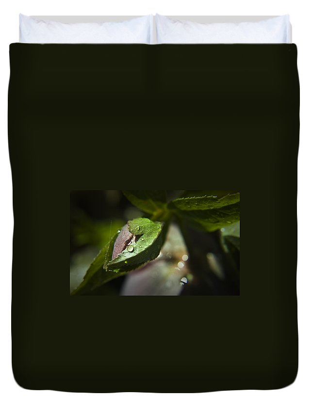 Helleborus Duvet Cover featuring the photograph Helleborus Bud by Teresa Mucha