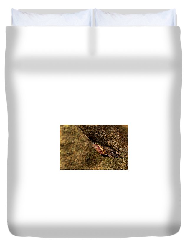 Little Duvet Cover featuring the photograph Hello, My Little Friend by Emily Sims