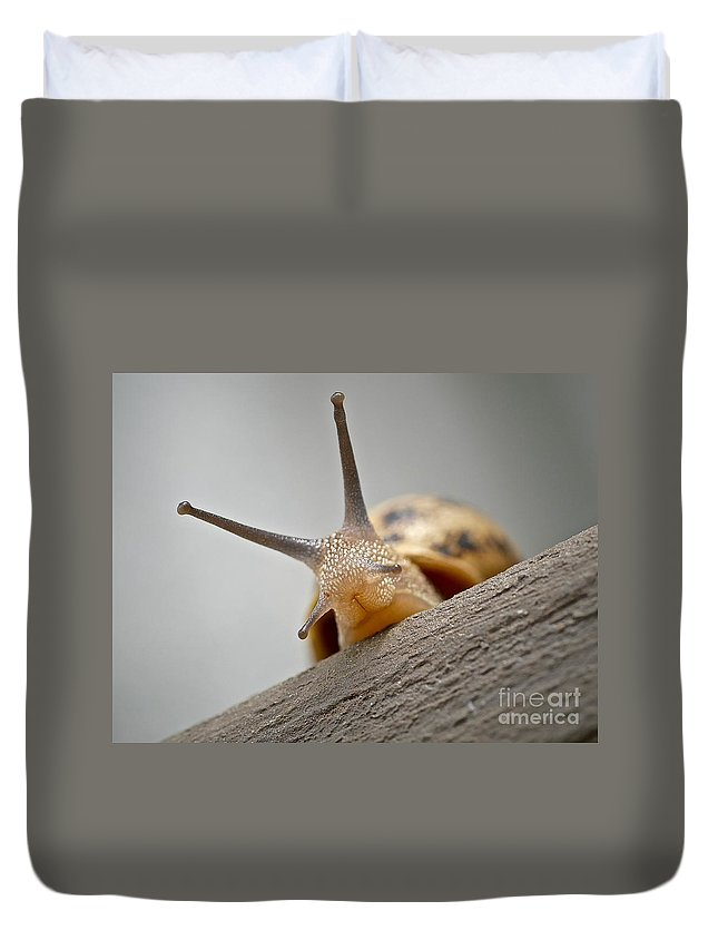 Slug Duvet Cover featuring the photograph Hello There by Elisabeth Derichs