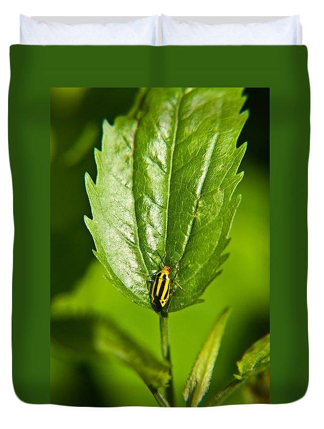Hemiptera Duvet Cover featuring the photograph Hemiptroid Sucking Bug by Douglas Barnett