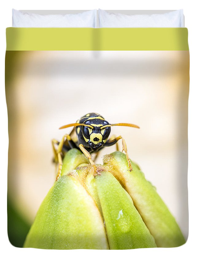 Insect Duvet Cover featuring the photograph Here's Looking At You by Cathy Kovarik