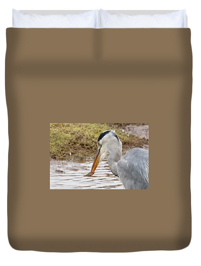 Heron Duvet Cover featuring the photograph Heron Harpoon by Bob Kemp