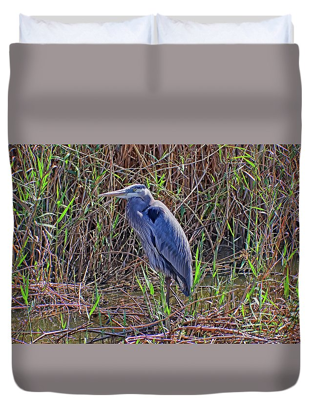 Great Blue Heron Duvet Cover featuring the photograph Heron In Marshes by Robert Brown