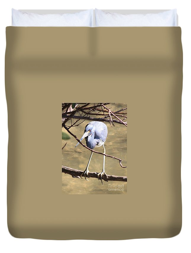 Tricolored Heron Duvet Cover featuring the photograph Heron On Branch by Carol Groenen