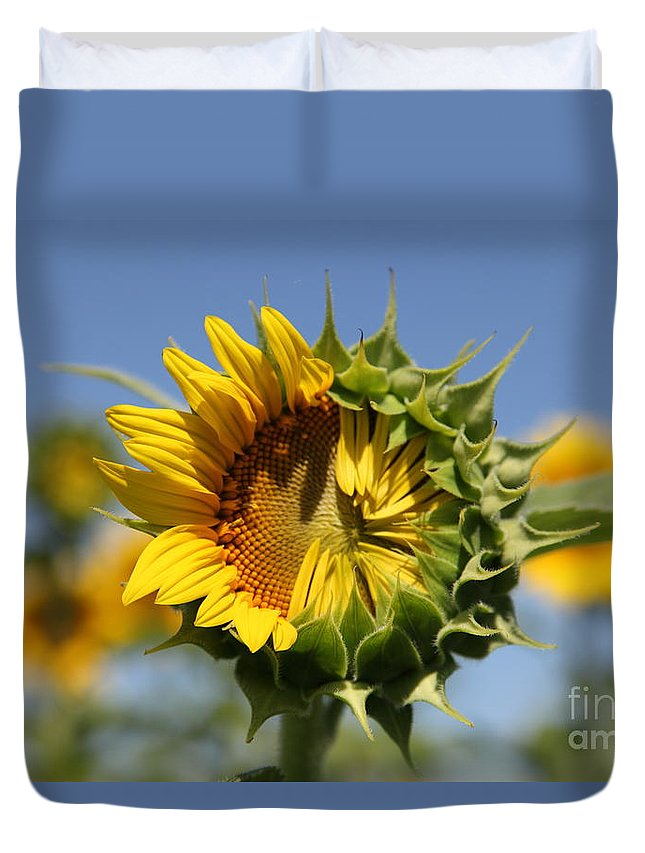 Sunflowers Duvet Cover featuring the photograph Hesitant by Amanda Barcon