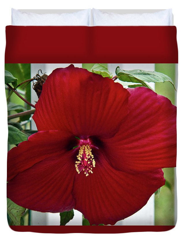 Hibicus Duvet Cover featuring the photograph Hibiscus By Picket Fence by Douglas Barnett