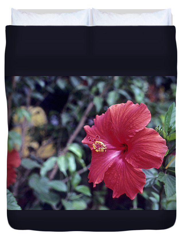 Flower Duvet Cover featuring the photograph Hibiscus by Deni Dismachek