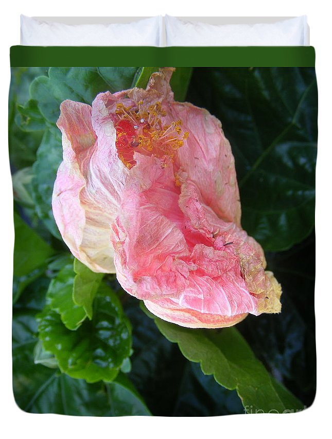 Photography Duvet Cover featuring the photograph Hibiscus Heaven by Nancy Kane Chapman