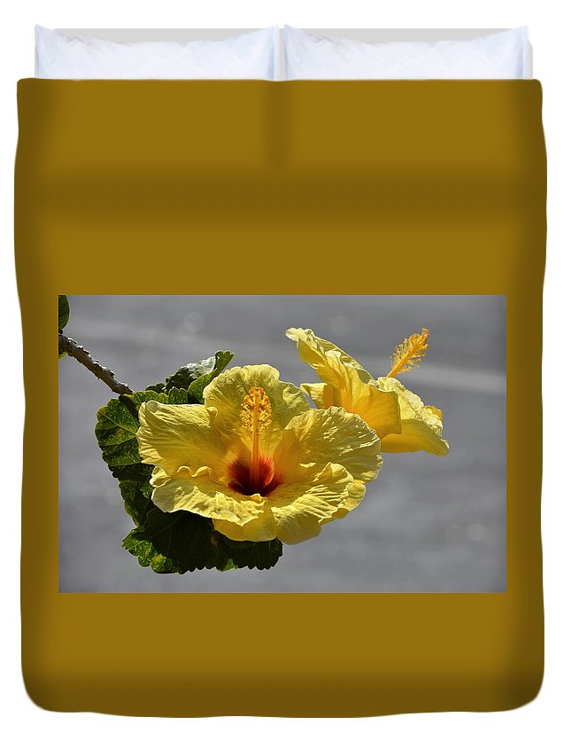 Flowers Duvet Cover featuring the photograph Hibiscus by Jewels Blake Hamrick
