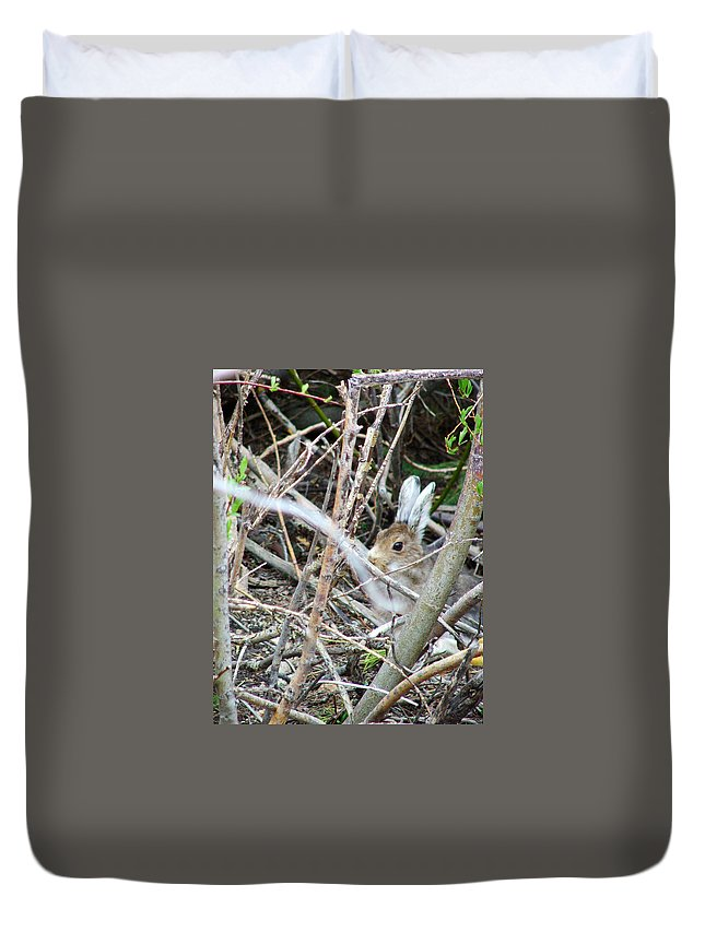 Colorado Duvet Cover featuring the photograph Hidden Hare by Bob W Brown