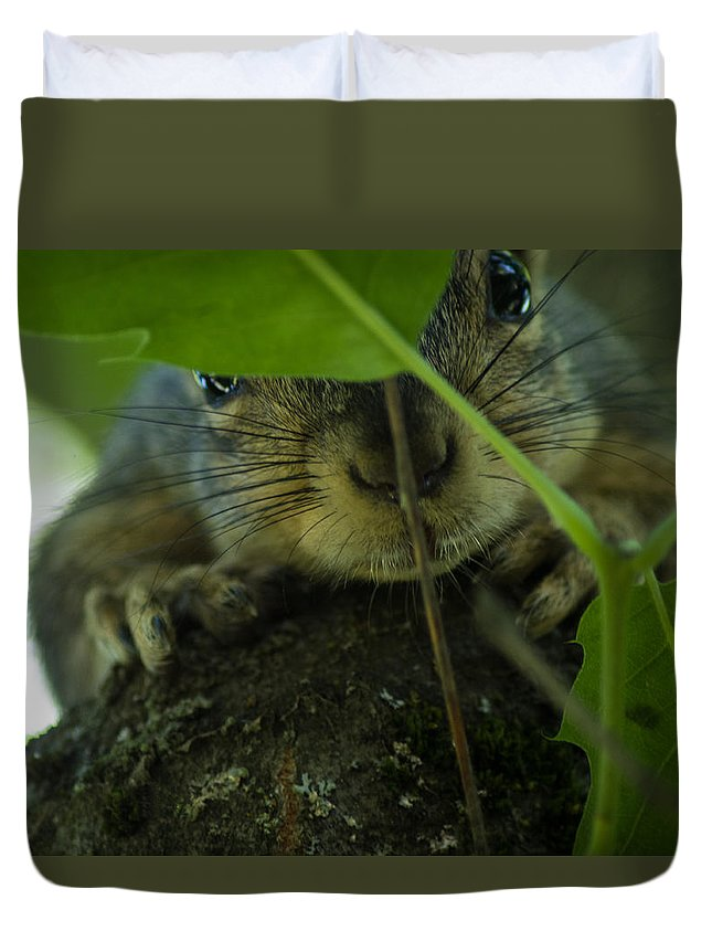 Squirrel Duvet Cover featuring the photograph Hiding In Plain Sight by Carol Jenks