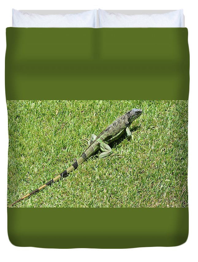 Iguana Duvet Cover featuring the photograph Hiding In The Open by Arlin Harder